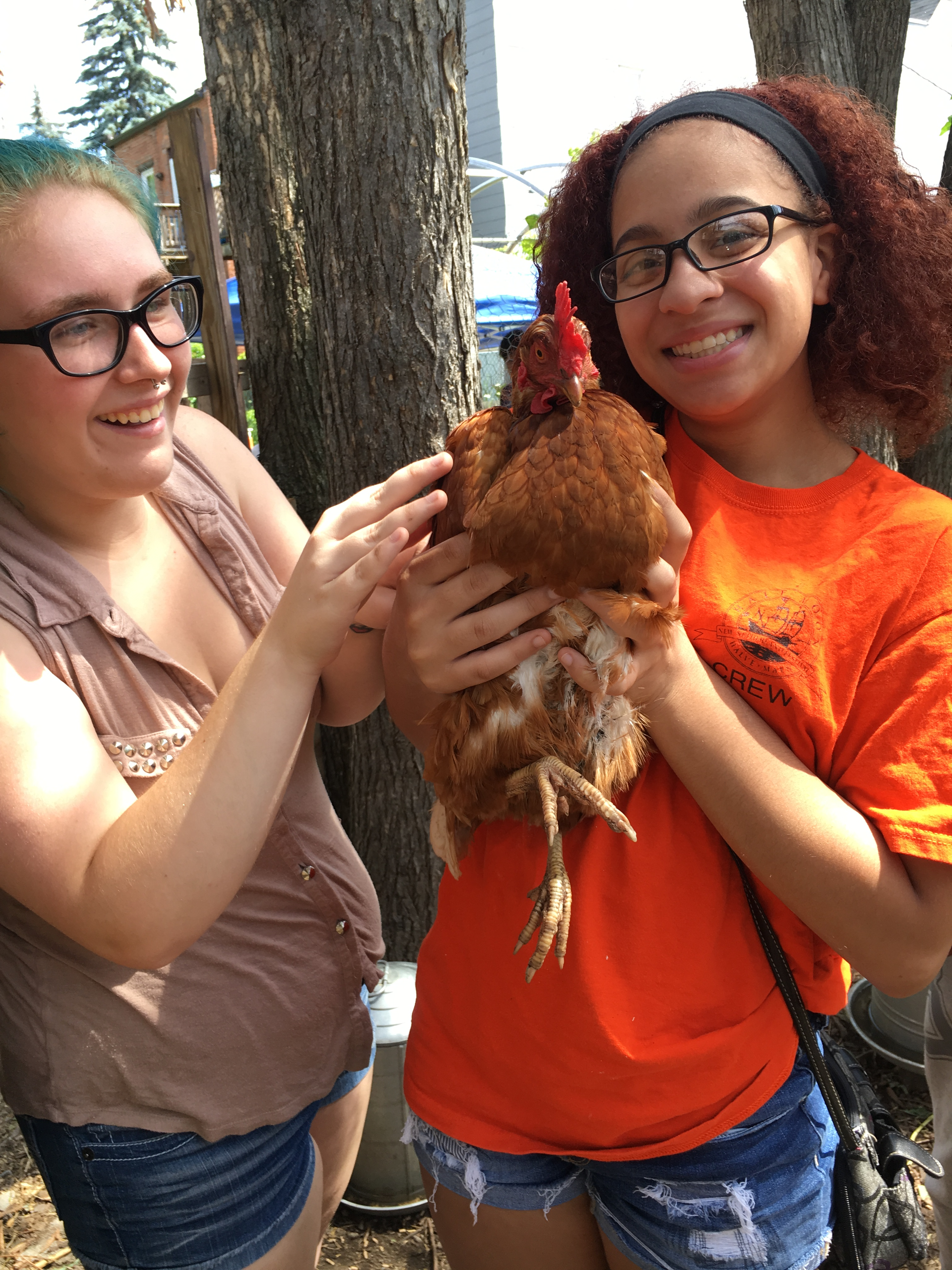 [CANCELLED] Chickens Workshop: Building a Hoop House and Chicken Care Basics!