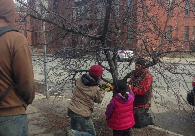tree pruning on sidewalk